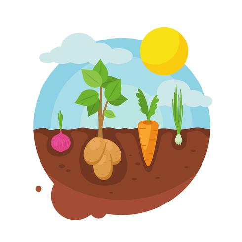 Vegetable Garden Illustration